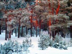 Таунхаус в лесной Буче, большая площадь, отличное качество.